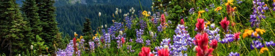 mount-rainier-national-park-priroda-luga-303083